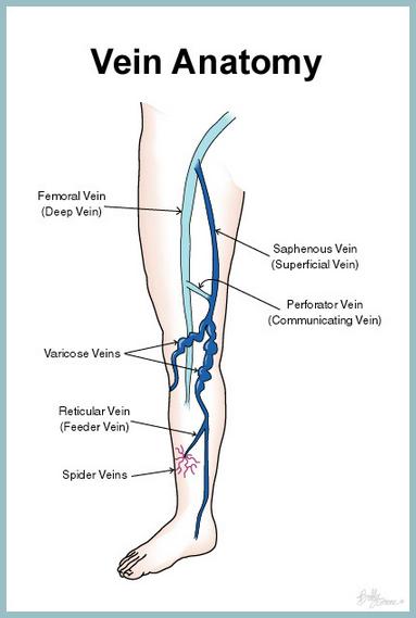AVC Varicose Veins Vein Anatomy
